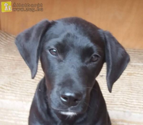 Örökbe fogadható Inez kutya