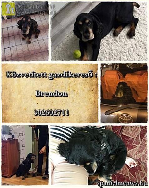 Brendon nagyon energikus, szeretetre éhes, labdázni szerető kutyus.