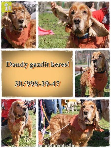 Dandy 2010-es születésű, édes legényke
