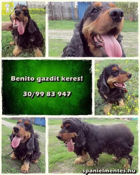 Benito 2011-es legényke