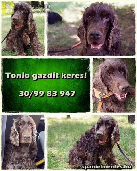 Tonio 9 és fél éves