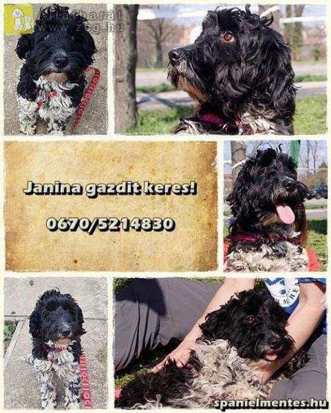 Janina, a Hőscincér