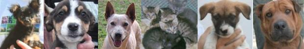 cica / kutya �r�kbefogad�s, gazdikeres�, ad� 1% t�mogat�s