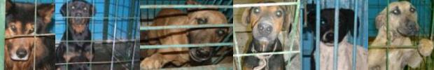 állatmentés adó 1 adóbevalláskor állatmenhely alapítvány