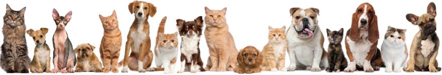 állatvédelem adó1 támogatás
