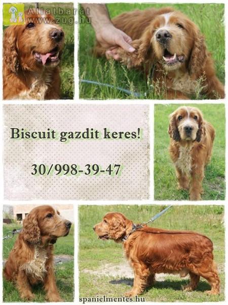 Biscuit (barátainak csak Kekszes) 2010-es születésű legényke.