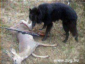 vadász világ, nem tréfa!