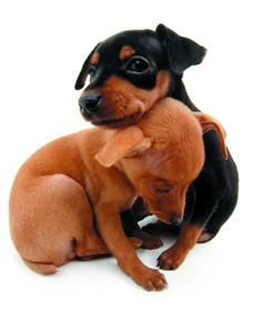 Állatvédelem: tüzelési idõszakban fokozottabban figyeljünk házi kedvenceinkre!