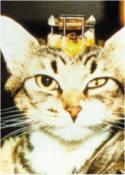 macskán végzett kísérlet