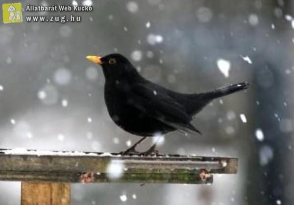 Felvettük videóra, hogy hogyan zajlik a madarak etetése - nézd meg!