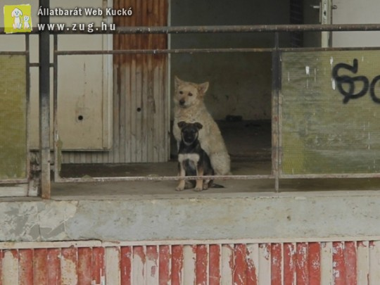 Kutyusokat mentettünk az árvízi fogságból