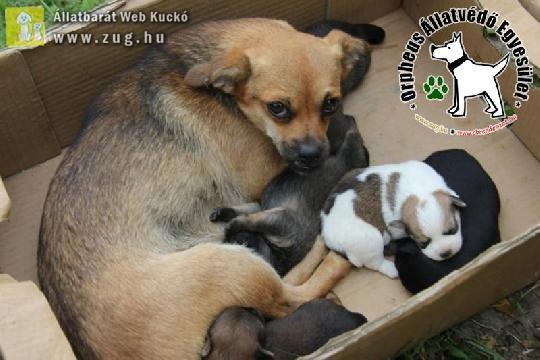 Kiskutyák születtek a csatornában