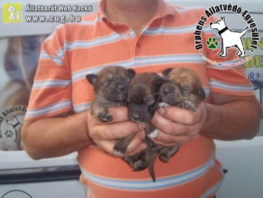 Dajkakutyához kerültek a zacskóban kidobott újszülött kiskutyák