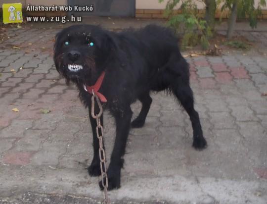 Belebolondulhat a kutya a láncon tartásba?!