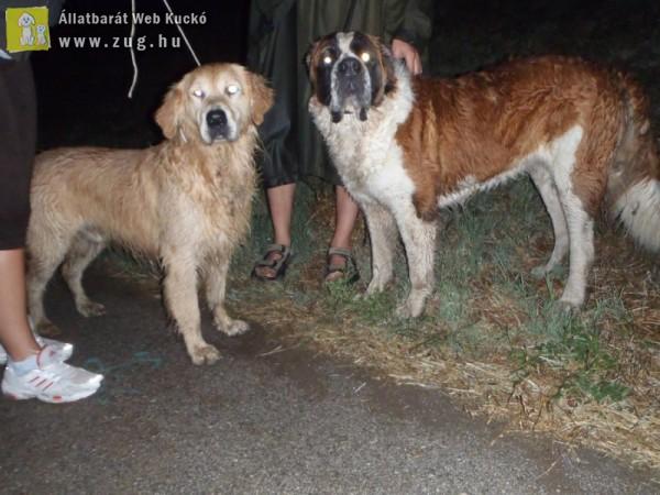 Sok a regisztrálatlan kutyachip