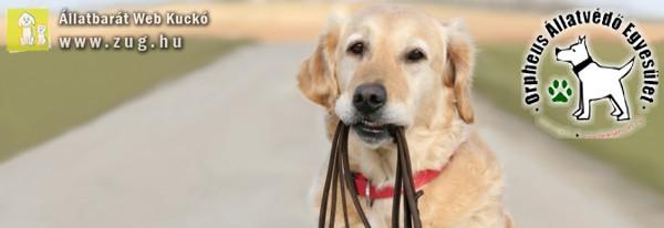 Póráz, nyakörv, kutyaház adományt várnak az állatvédők