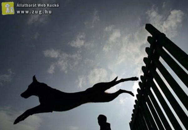 Utcára kiszökdöső kutyák nyomában