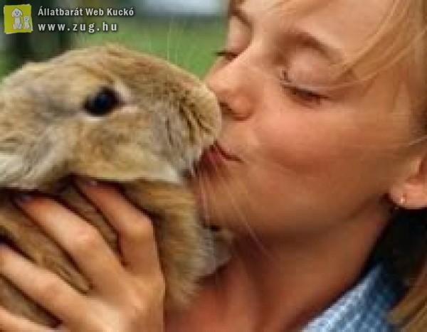 Húsvéti állatstopot kérnek az állatvédők