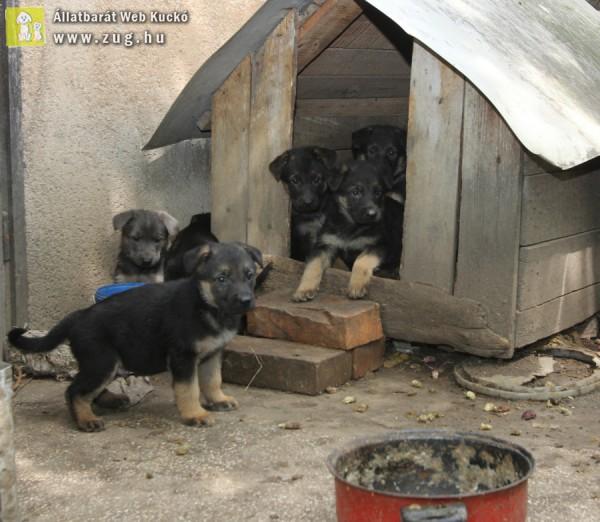 Póráz, nyakörv, kutyaház adománnyal, kutyus örökbefogadással is segíthetsz!