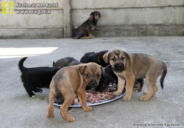 sintértelepek állatvédelem kutyamentés