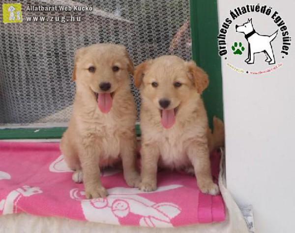 Megmentettük a magára hagyott kutyatestvéreket