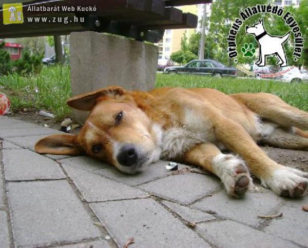 Állatvédelem, állatmentés támogatása telefonos adományvonalon