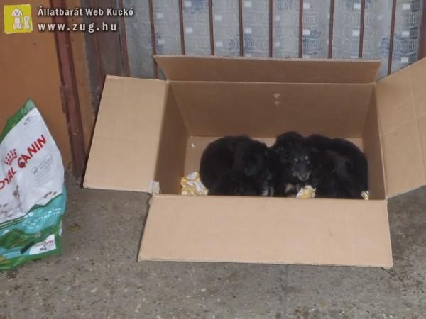 Panelházak közé dobálták ki a kiskutyákat - állatmentés