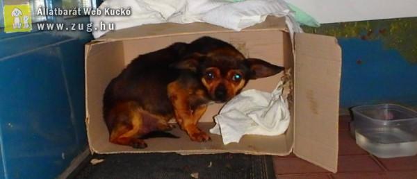 Karácsonykor is volt megmentendő kutyus