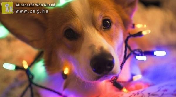 Élő állatot karácsonyra: NE!