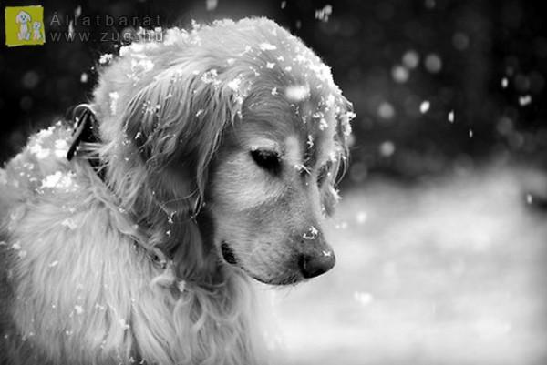Kutya hideg van a háziállatoknak is - fagyriadó