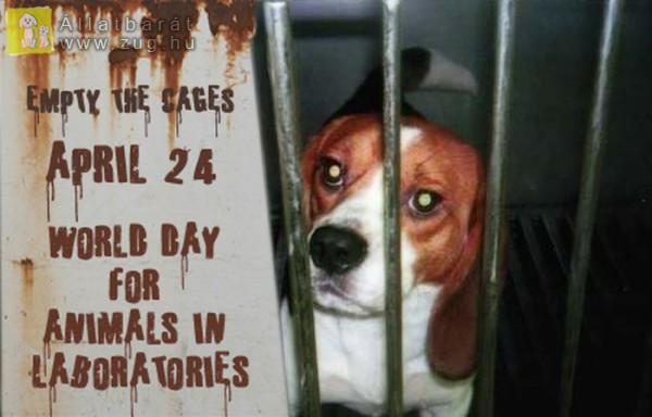 Kísérleti állatok védelmének világnapja: április 24.