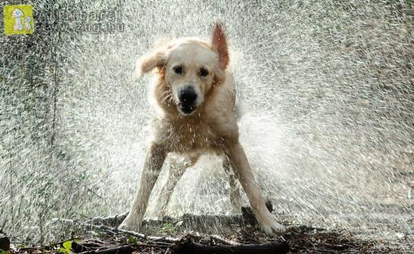 Hasznos tanácsok a kutya meleg átvészelésére