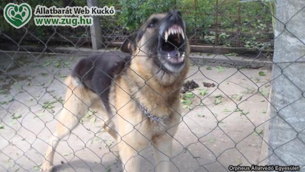 Békés kutyából is válhat vadorzó?!