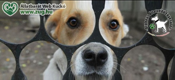 Kutyajogosítvány is kellene