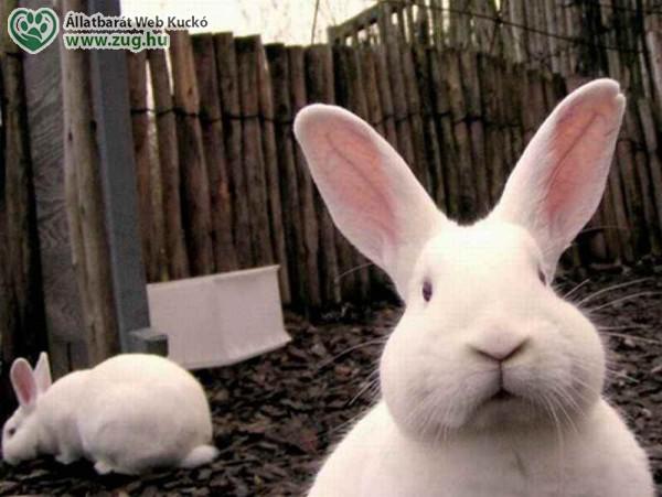 Húsvéti NyusziSTOP-ot kérnek az állatvédők - tudatos vásárlás, felelős állattartás