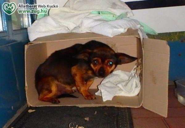 A hontalan állatok világnapja augusztus 16