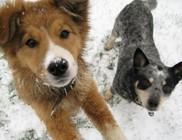 Kutya hideg van az állatoknak is!