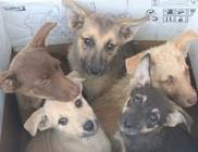 Adó 1 százalék az Állatok megmentésére