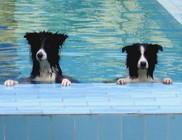 Hőségriadó: házi kedvenceinket is hőguta fenyegeti - állatvédelem