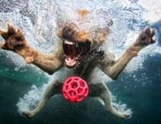 Víz alatti kutyaélet - érdekes képek