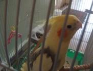 Kidobták kalitkástól a madarat - madármentés