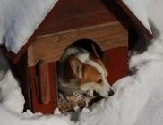 Kutyaház téliesítése – a kutyahidegre fel kell készülni