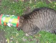 Rossz helyen nyalakodott, beszorult a cica feje a konzerves dobozba