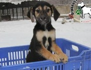 Téli történések az állatvédelmi központban
