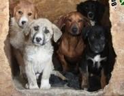 Utcáról megmentett kutyusok keresik Örökbefogadóikat