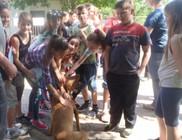 Az állatvédelmi központtal ismerkedtek a gyerekek