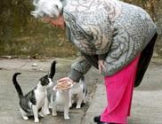 Utcai macskaetetés és macskatartás