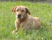 Száz kilométerre kóborolt el Buksi - a kutyus gazdihoz került