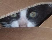 Kiscica került elő az út széli dobozból, kutyus meg a kuka mögül