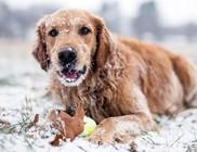 Kutyakarácsony az Állatok megmentéséért